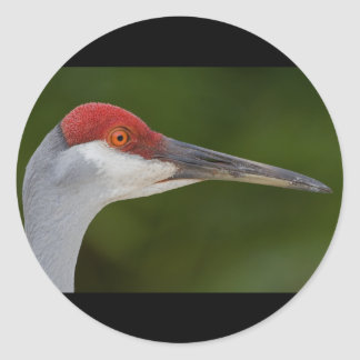 Tiny Red Feathers Classic Round Sticker