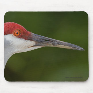 Tiny Red Feathers Mouse Pad