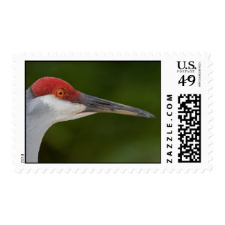 Tiny Red Feathers Postage Stamps