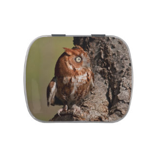 Tiny Red Screech Owl Jelly Belly Tins