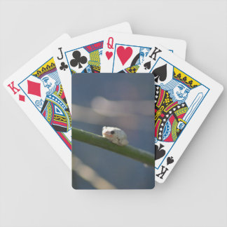 Tiny River Frog Bicycle Playing Cards