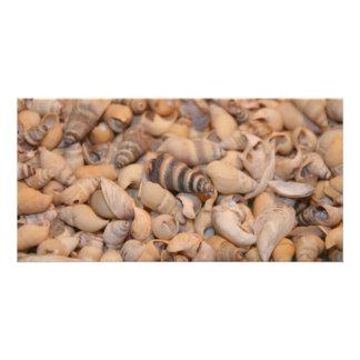 Tiny sea shells card