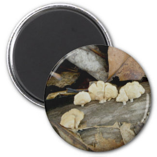 Tiny Shelf Fungus on Log Magnet