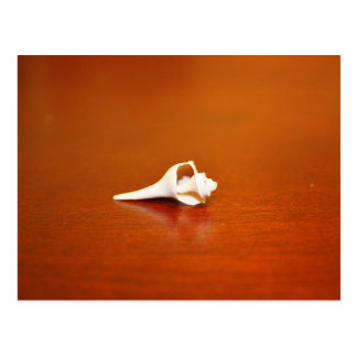 Tiny Shell Postcard