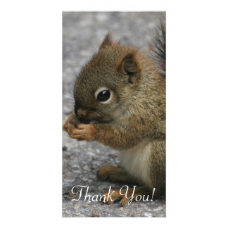 Tiny Squirrel Nibbles At Food In Paws Picture Card
