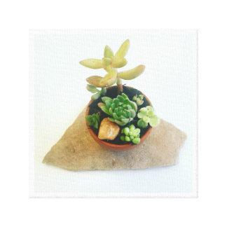 Tiny Succulents Canvas Print