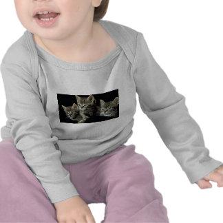 Tiny Tabby Trio T-shirts