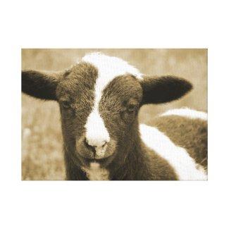 Tiny the Lamb wrappedcanvas
