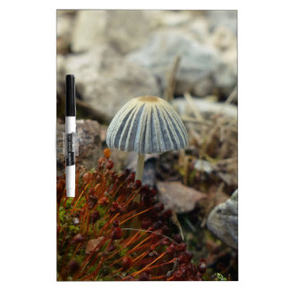 Tiny Toadstool Dry Erase Board