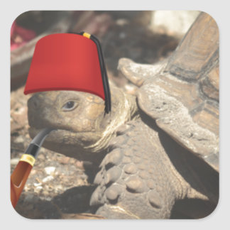 Tiny tortoise wearing a boumi hat square sticker