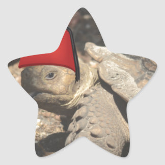 Tiny tortoise wearing a boumi hat star sticker