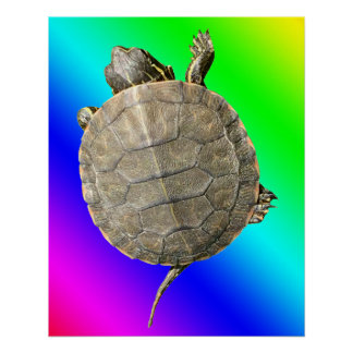 Tiny Turtle (Tortoise) on Rainbow Colors Gradient Poster