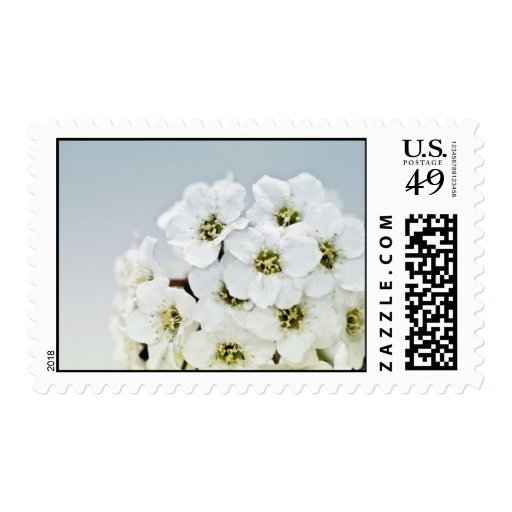 Tiny White Flower Bouquet Macro Postage Stamps