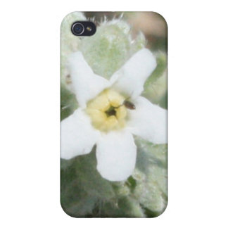Tiny White Wildflower 4/4s  iPhone 4/4S Covers