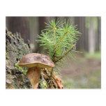 Tiny Wild Mushroom Postcards