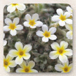 Tiny Yellow Flowers Drink Coasters