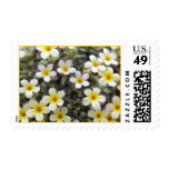 Tiny Yellow Flowers Postage Stamps