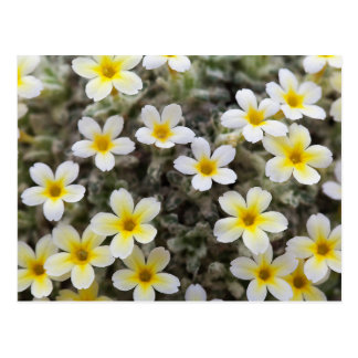 Tiny Yellow Flowers Postcard