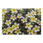 Tiny Yellow Flowers Posters