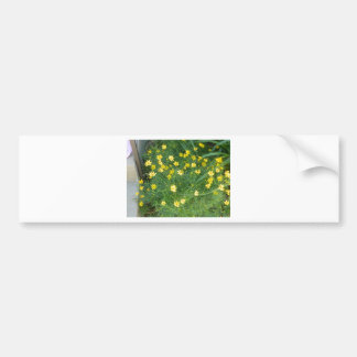 Tiny yellow flowers with greenery car bumper sticker