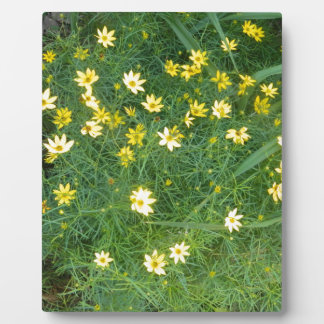 Tiny yellow flowers with greenery plaque
