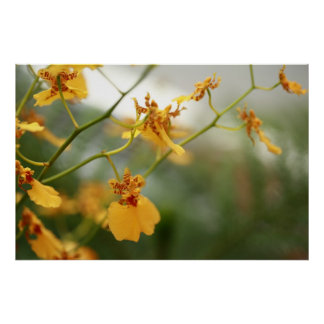 Tiny Yellow Orchids Poster
