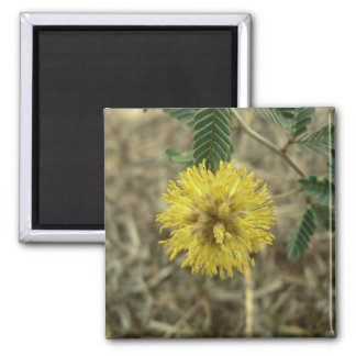Tiny yellow wildflower. 2 inch square magnet