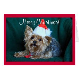 Tiny Yorkie in Santa Hat Greeting Card