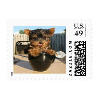 Tiny Yorkshire Terrier in a Teacup Postage
