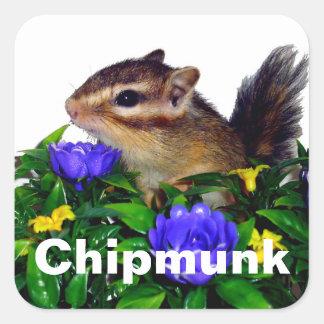 Tipo 1 de la foto del Chipmunk (4) Pegatina Cuadrada