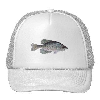 Tipo de pez blanco gorra