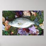 Tipo de pez blanco poster