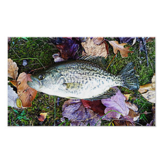 Tipo de pez blanco póster