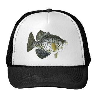 Tipo de pez gorros