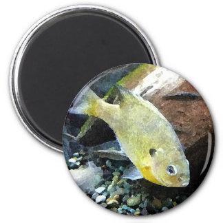 Tipo de pez imán redondo 5 cm