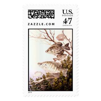 Tipo de pez negro y tipo de pez blanco timbre postal