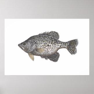 Tipo de pez póster