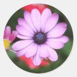 Tipo rosado flor de la margarita etiquetas redondas