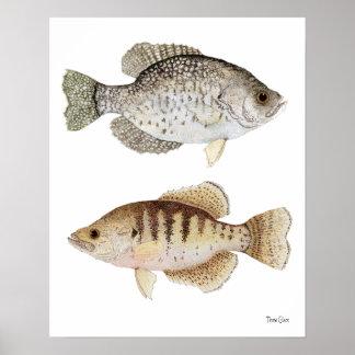 Tipos de pez negros y blancos póster