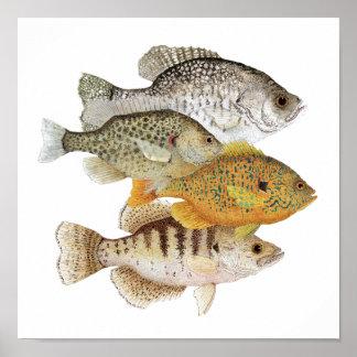Tipos de pez y Sunfish Póster