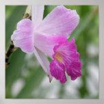 Tipos impresión de la orquídea del poster