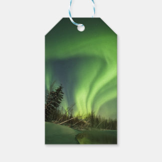 Tipping Spruce Aurora Gift Tags