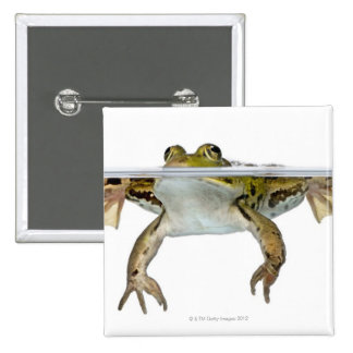 Tirado de una rana comestible que emerge delante pin cuadrado