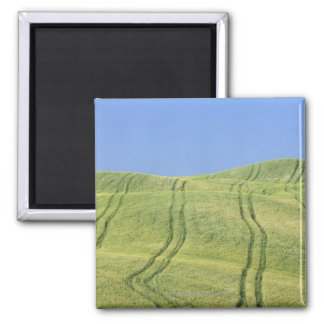 Tire Tracks in Wheat Field, Val d'Orcia, Siena Magnet