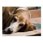 tired basset hound postcard