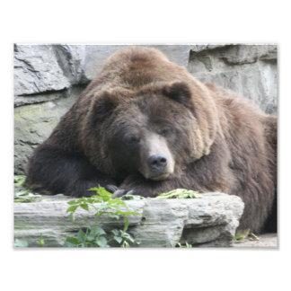 Tired Bear Photo Print