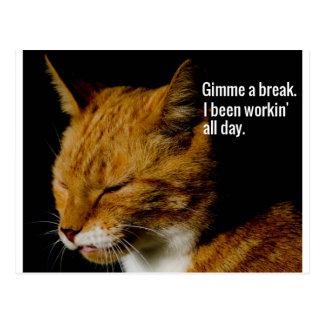 "Tired Cat Design - ""Gimme a break."" Postcard"