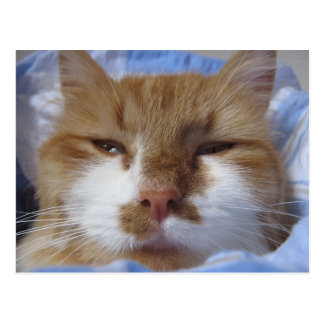 Tired Cat Postcard