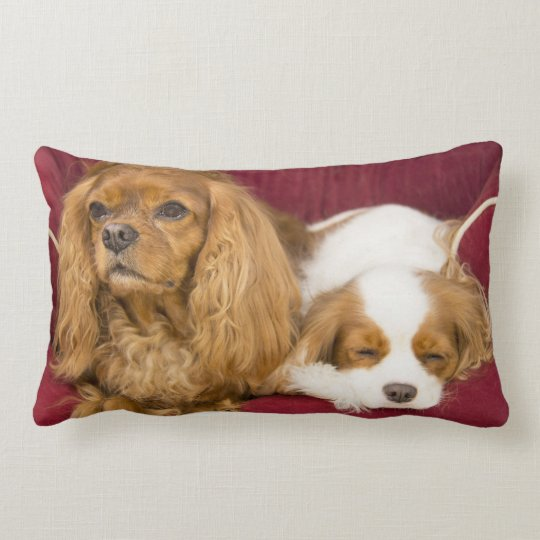 Tired Cavalier King Charles Spaniels Lumber Pillow