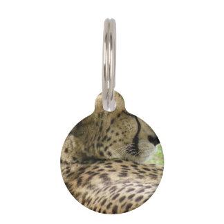 Tired Cheetah Pet Nametags